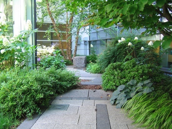 stone path and ferns in hospital garden