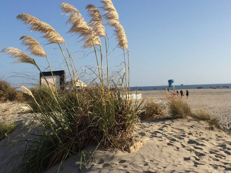 Sea grass growing on mound of sand on Coronado Island: perfect retirement place