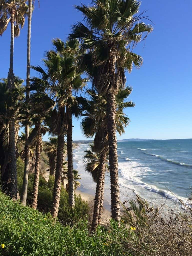 ocean view from cliff with palm trees