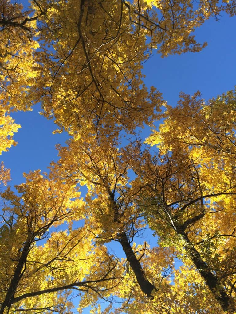 seasonal affective disorder/aspen colors