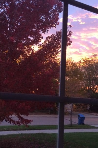 seasonal affective disorder/maple tree and sunrise