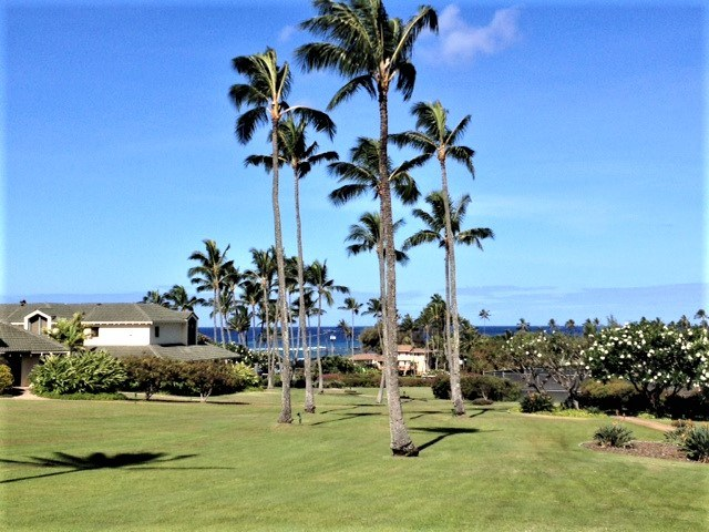 Sweeping green lawn with a cluster of palm trees and Pacific Ocean in background on Kauai
