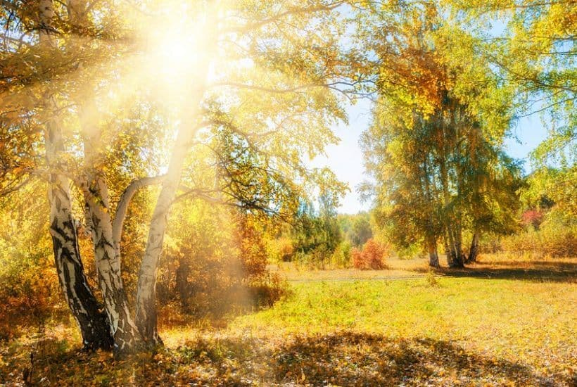 Beautiful autumn forest at sunny day- best morning routine
