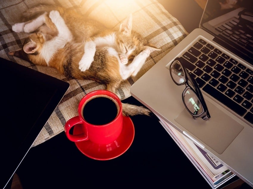 Two sleeping kittens near open laptop with red cup of coffee - how to start freelance writing
