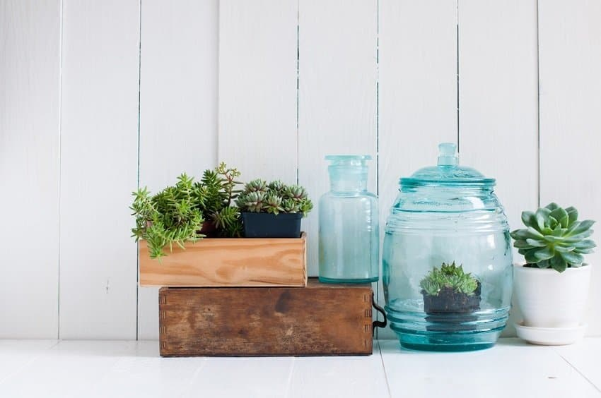 plants and blue glass containers on white kitchen counter - clearing clutter where to start